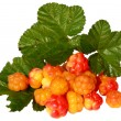Cloudberries with leaves — Stock Photo #4915606