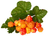 Cloudberries with leaves — Stock Photo