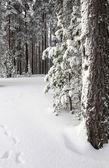 Winter wild bos — Stockfoto