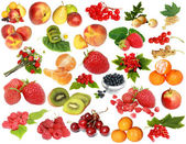 Fruit-berry collection — Stock Photo