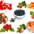 Collection of wild berries — Stock Photo