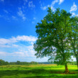 Tree on summer field — Stock Photo