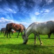 Wild horses on the field — Stock Photo
