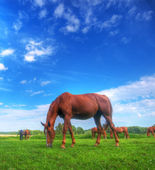 Wild horse on the field — Stock Photo