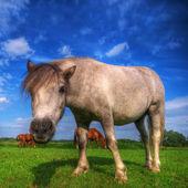 Dziki koń młody na polu — Zdjęcie stockowe