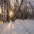 Winter white forest — Stock Photo