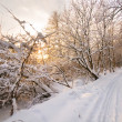 Stock Photo: Winter white forest