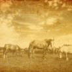 Landscape and horses on vintage grunge paper — Stock Photo
