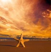 Seestern am strand bei sonnenuntergang — Stockfoto