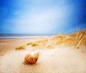 Shell on sand on summer beach — Stock Photo