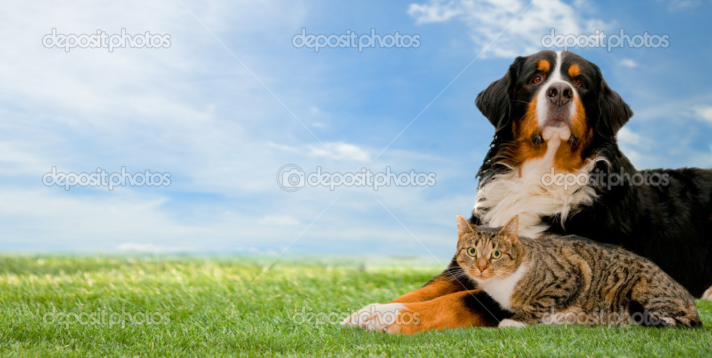 Dog and cat together on grass, sunny spring day and blue sky. Panorama version — Photo #5200942