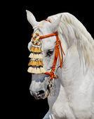 Grey andalusian horse spanish decoration — Stock Photo