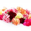 Carnations — Stock Photo #5263665