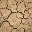 Droughty soil close up - Stock Photo