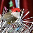 Decorative birdy — Stock Photo