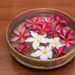 Frangipani — Stock Photo #4689011