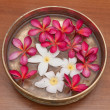 Frangipani — Stock Photo #4689013