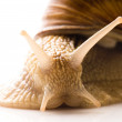 Snail on white — Stock Photo