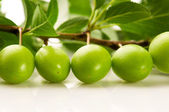 Growing green plums isolated on the white — Stock fotografie