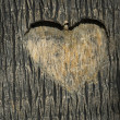 Heart carved in tree trunk - Stock Photo