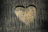 Heart carved in tree trunk — 图库照片