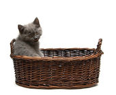 Kitten weergegeven: tong — Stockfoto