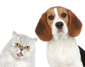 Portrait of a cat and dog — Stock Photo