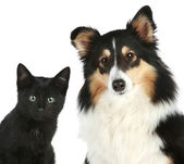 Close-up portrait of a kitten and dog — Stock Photo