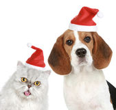 Portrait of a cat and dog in red christmas hats — Стоковое фото