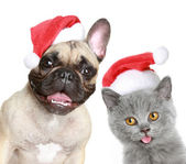 Puppy and kitten in red christmas cap — Stock Photo