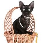 Devon-rex cat portrait in wattled basket with beads — Stock Photo #4444898