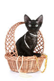 Devon-rex cat portrait in wattled basket with beads — Zdjęcie stockowe