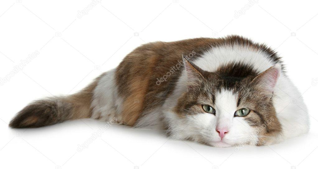 arctic cat forum