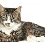 Striped kitten on a white background — Stock Photo #4952517
