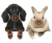 Rabbit and dog. Close-up portrait — Stock Photo