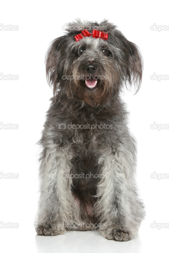 Shaggy gray mongrel with red ribbons on white background — Stock Photo #4952553