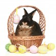 Cute easter bunny with colored eggs — Stock Photo