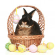 Cute easter bunny with colored eggs - Stock Photo