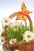 Basket with flowers on blue — Stock Photo