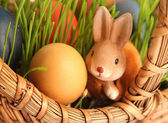 Rabbitin grass — Stock Photo