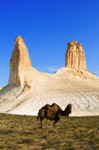 Camel against a beautiful rock — Stock Photo