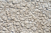 Background of the dry earth — Stock Photo