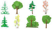 Set of 8 trees — Stock Vector