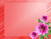 Red frame with flowers hollyhock — Stock Photo