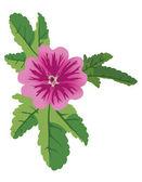 Vector illustration of mauve flower malva — Stock Vector