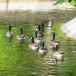Waterfowl in the zoo — Stock Photo