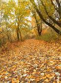 Autumn park road — Stock Photo