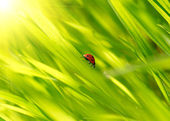 Ladybug on green grass — Stock Photo