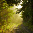 Foto Stock: Beautiful morning in the forest