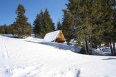 Bower in bergen — Stockfoto